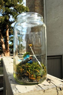 Make your own desktop terrarium in a jar
